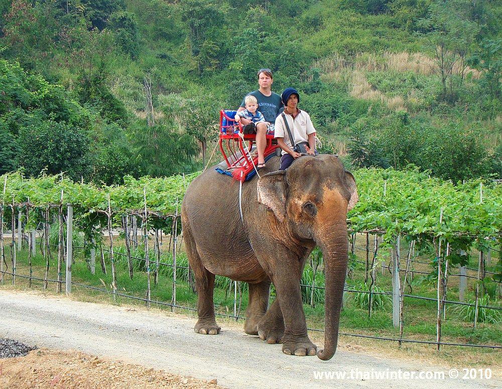 Прогулки на слоне