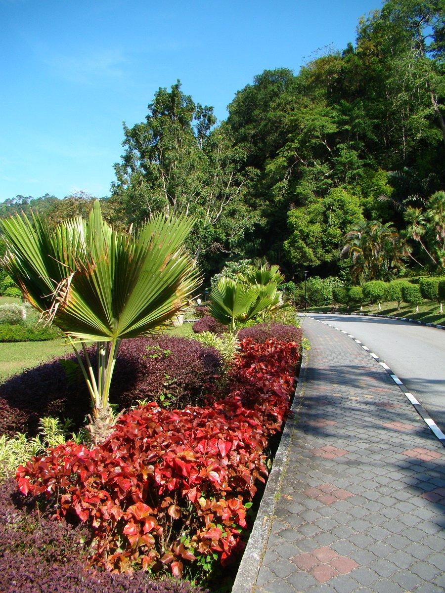 Malasian Park