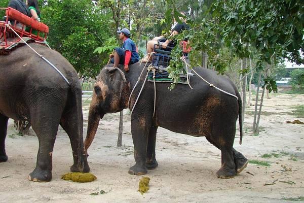 Минное поле слонов | Катание на слонах в Хуа Хине