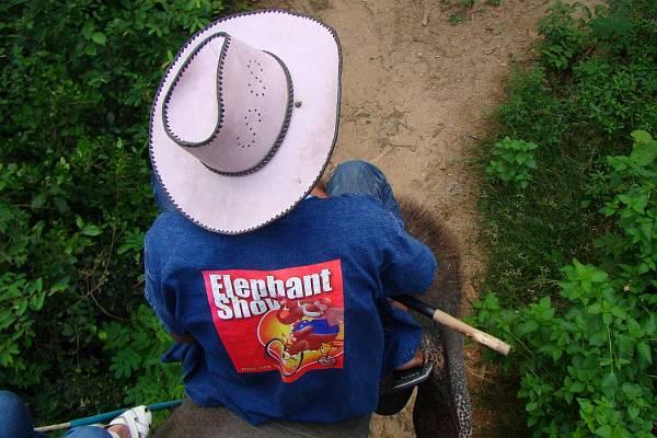 Погонщик на шее слона | Катание на слонах в Хуа Хине