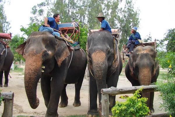 Погонщики слонов| Катание на слонах в Хуа Хине