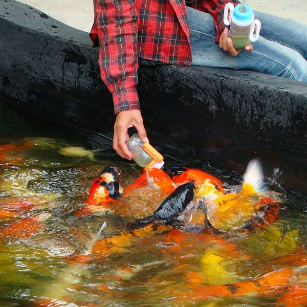 Кормление рыб | Катание на слонах в Хуа Хине