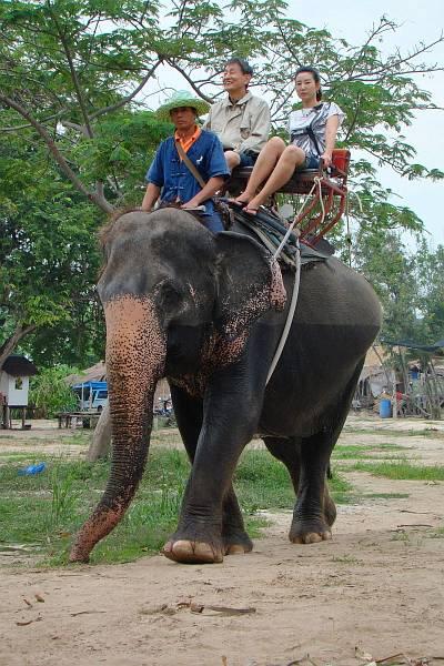 Китайцы - наездники на слонах | Катание на слонах в Хуа Хине