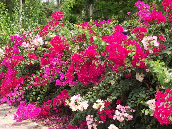 Цветы вдоль дороги обычное дело в Таиланде | Зима в Таиланде