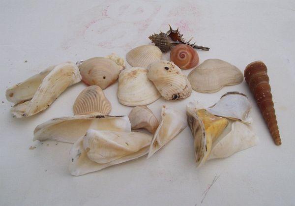 Ракушки с моря на пляже Sai Noi в Хуа Хине | Зима в Таиланде