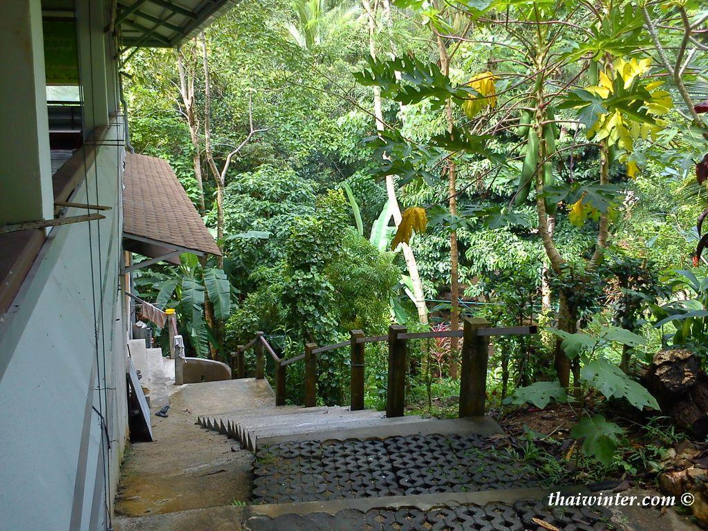 Ретрит в медитационном центре dipabhavan на Самуи | Зима в Таиланде