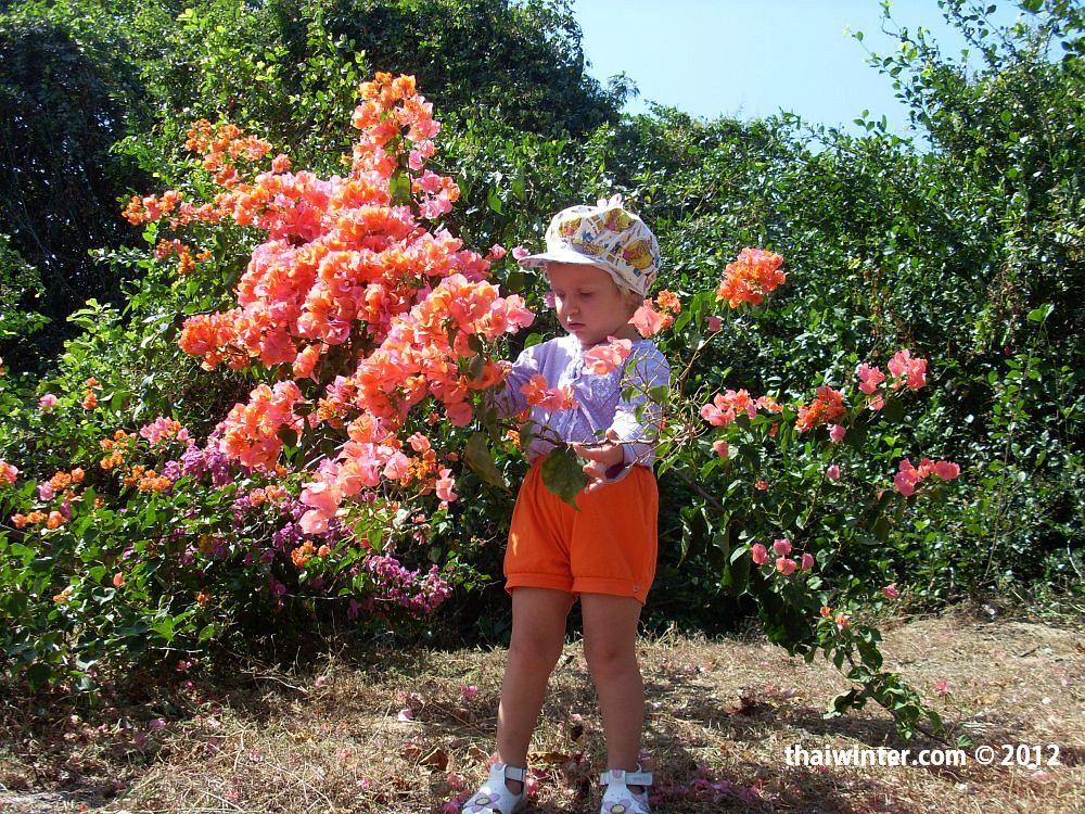 Тайские цветы на Международный Женский День - 8 марта!