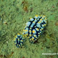 Сноркелинг на Ко Чанге - морская живность