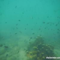 Сноркелинг на Ко Чанге - стая рыб