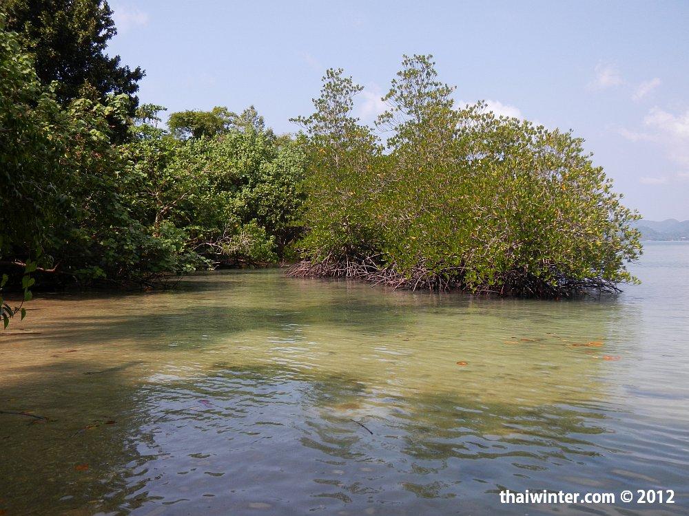 Мангры на Kho Man Nai island