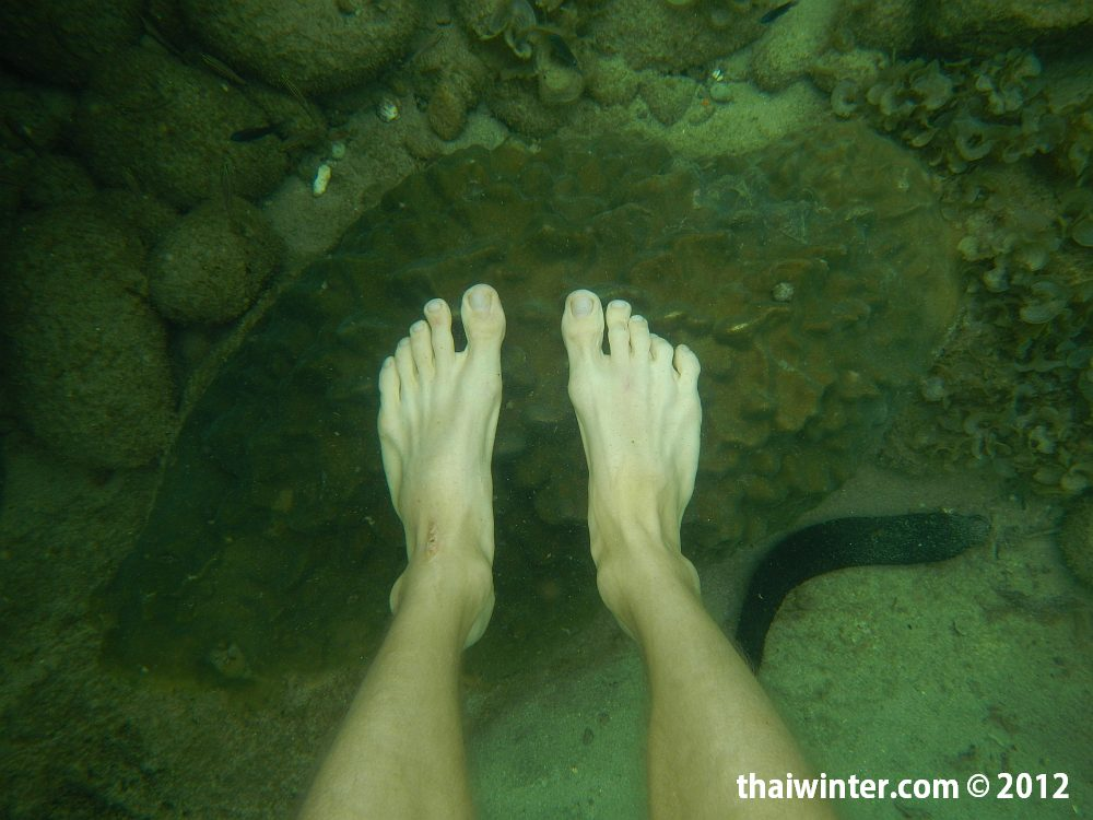 Осторожнее с кораллами в воде