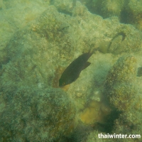 Подводная живность на пляже острова Koh Wai