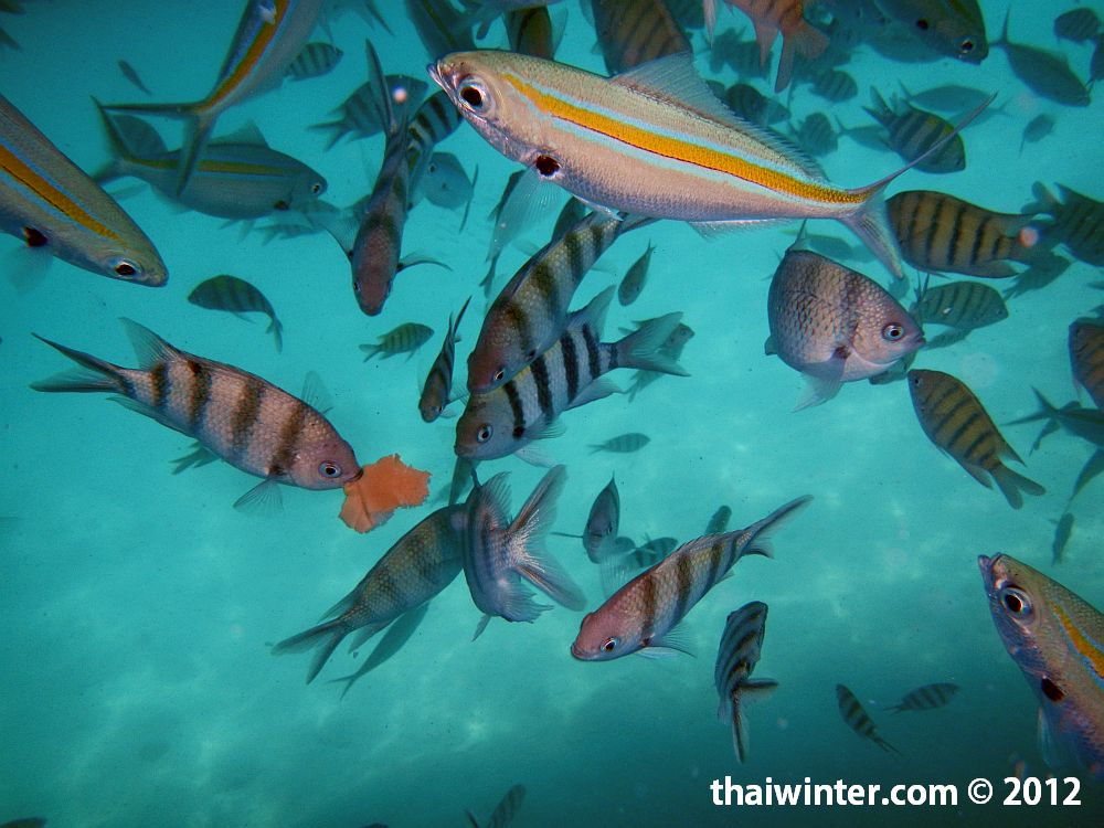 Снорклинг тур 4 острова - кормление рыбок