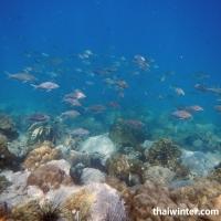 Рыбки над рифом