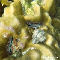 Раковины моллюсков в кораллах