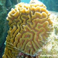 Поверхность живых кораллов