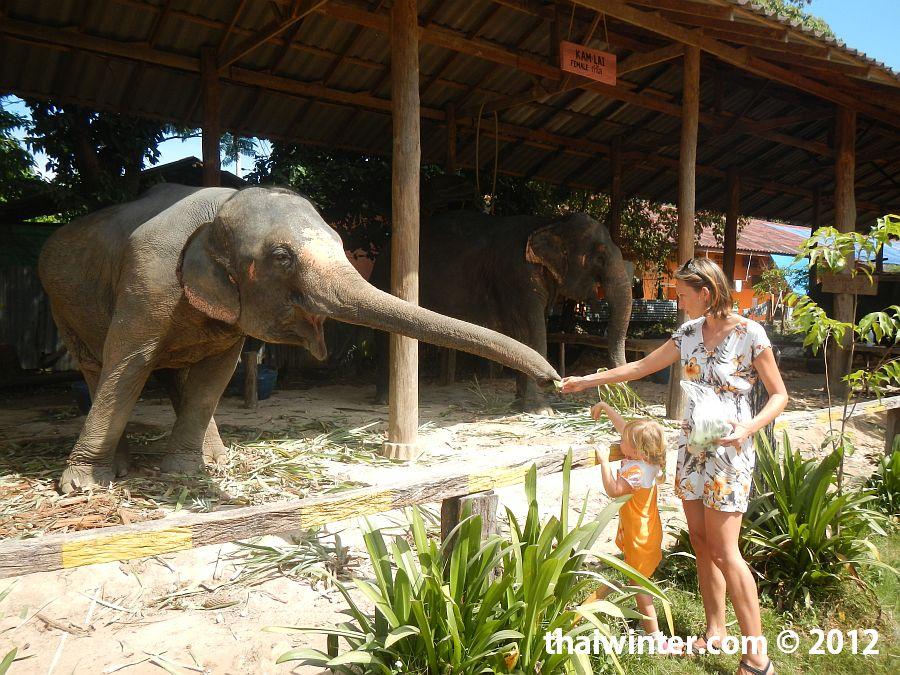 Слоны никогда не отказываются от угощения