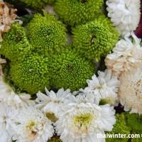 Flowers_53
