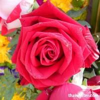 Flowers_56