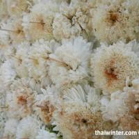Flowers_68