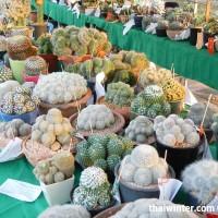 Kaktusy_01