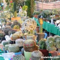 Kaktusy_02