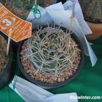 Kaktusy_07