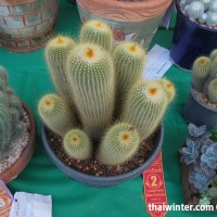 Kaktusy_13