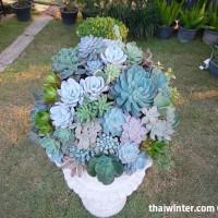 Kaktusy_20