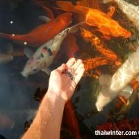 Fish_Feeding_02