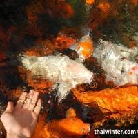 Fish_Feeding_03