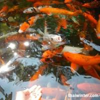 Fish_Feeding_05