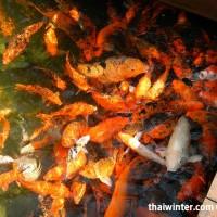 Fish_Feeding_06