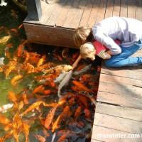 Fish_Feeding_07