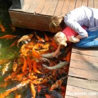 Fish_Feeding_08