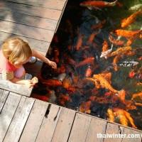 Fish_Feeding_09