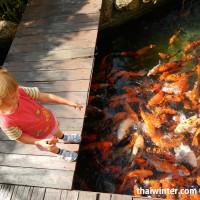Fish_Feeding_10