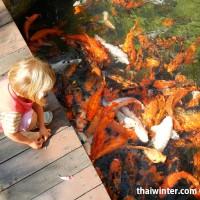 Fish_Feeding_14