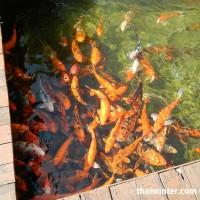 Fish_Feeding_15