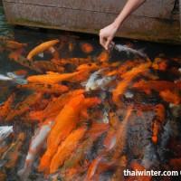 Fish_Feeding_16