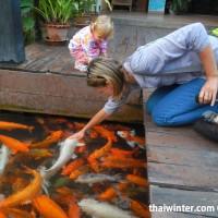 Fish_Feeding_17