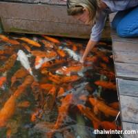 Fish_Feeding_18