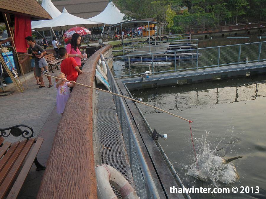 Кормление гигантских рыб