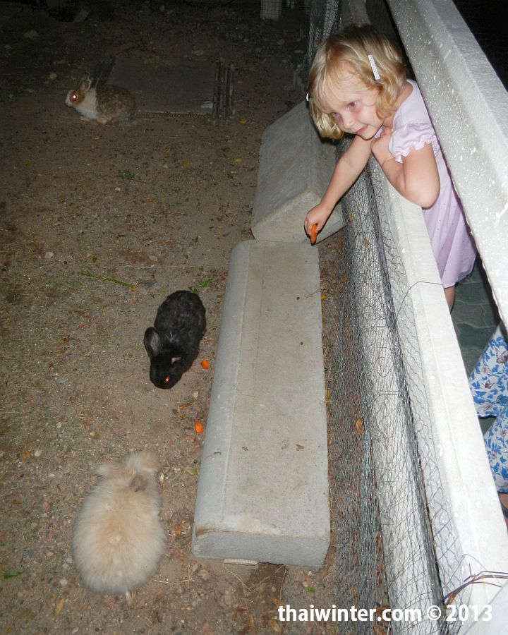 Кормим кроликов на входе/выходе