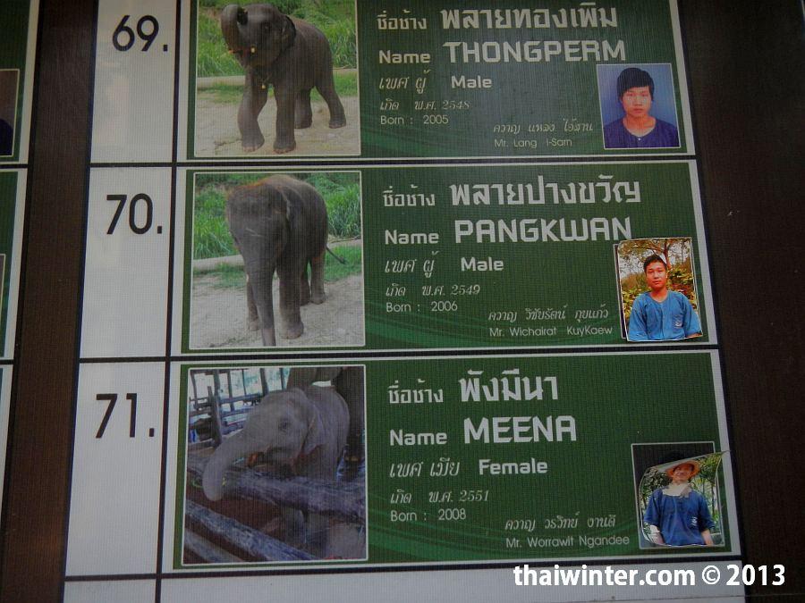 Стенд со списком всех слонов и их погонщиков