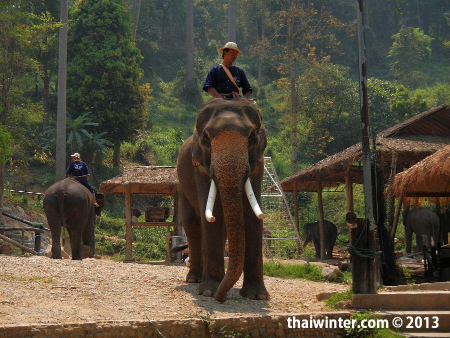 Дядька на красивом слоне