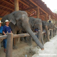 Photo_with_Elephants_1