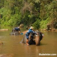 Photo_with_Elephants_6