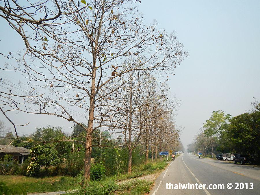 Осень в Чианг Мае зимой