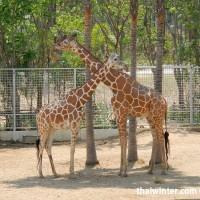 Night Safari Giraffe Restaurant